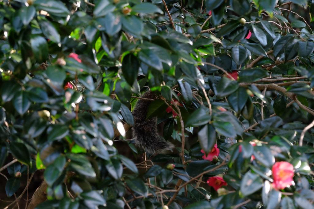 ホンドリスー小網代の森