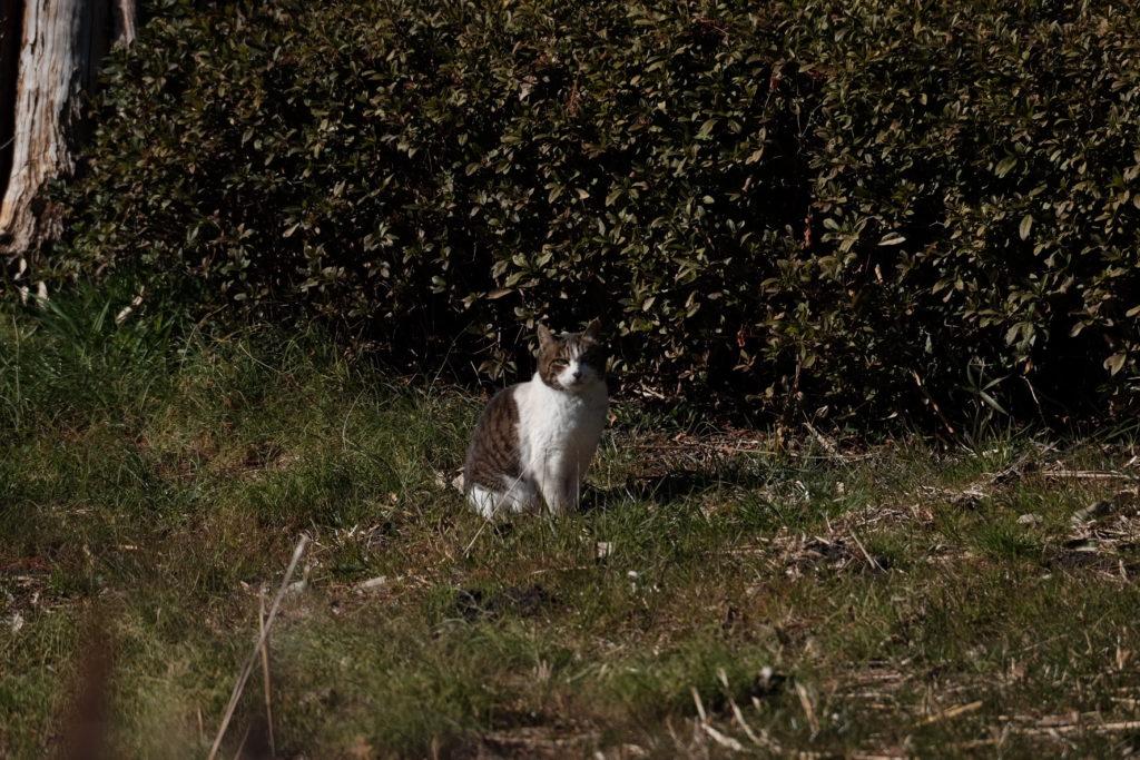 猫[川口自然公園/X-T1,XF100-400]