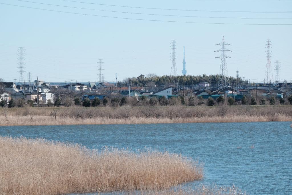 芝川第一調整池