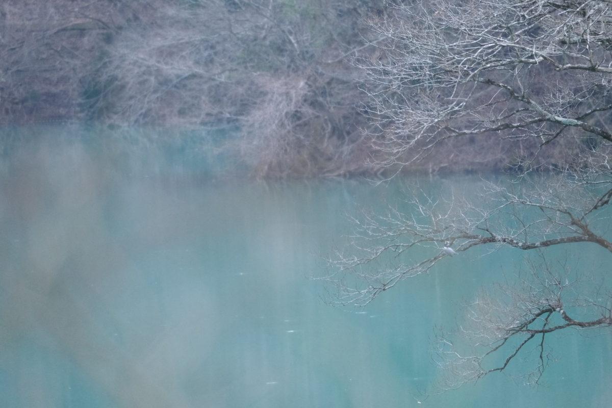 ヤマセミ【早戸川林道/X-PRO3,XF100-400】